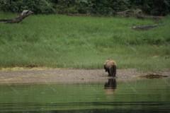 Bear Bottom Khutzeymateen Inlet British Colombia Canada